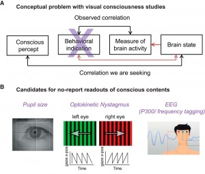 Experimental outline for the no-report paradigm for NCC studies. A, Depiction of the problem. We aim for the correlation between a conscious content and a given brain state. What is measured experimentally is the correlation between a behavioral report and a measure of brain activity, which might be appropriate or not. Report-related neural activity poses a confound for the NCC. B, Involuntary physiological measures taken to infer the perceptual state of a subject to circumvent the behavioral report (Tononi et al., 1998; Leopold et al., 2003; Laeng and Endestad, 2012; Tsuchiya et al., 2015).